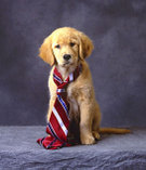 Dog_with_tie